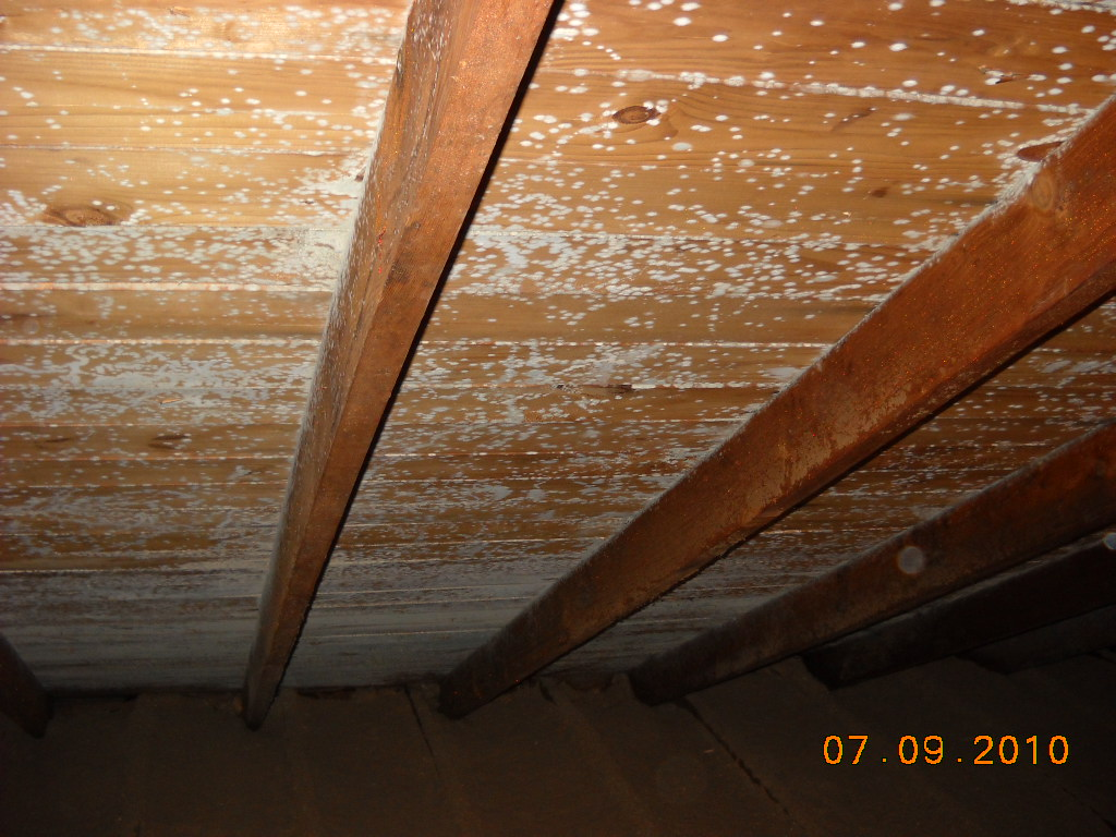 Mold removal in a dennis attic mold pros for Ecobatt insulation reviews